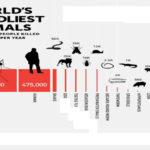 مرگبارترین حیوانات دنیا