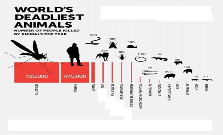 لیست سیاه: با مرگبارترین حیوانات دنیا آشنا شوید