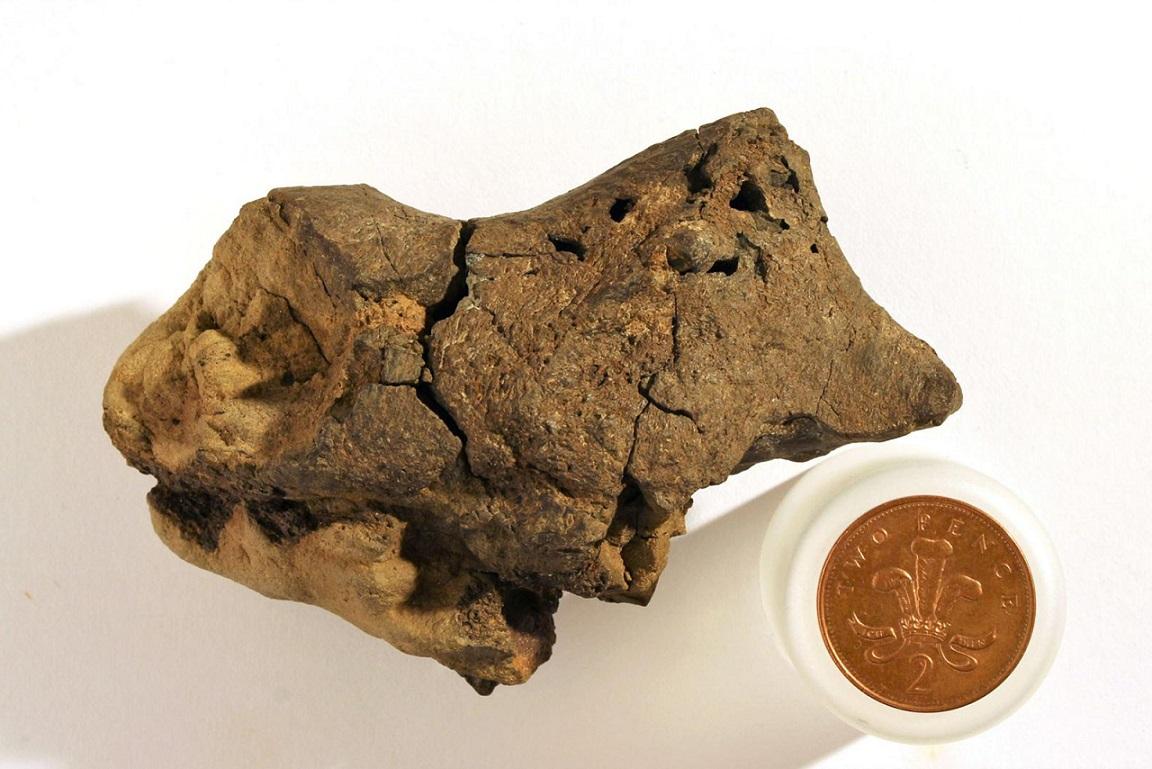 کشف مغز دایناسوری که جد پرندگان و خزندگان امروزی بوده است