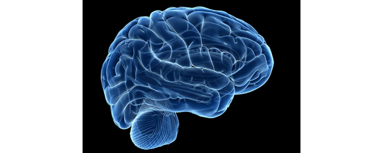 نانوسنسور های جدید شبیهسازی مغز را دقیقتر میکنند!