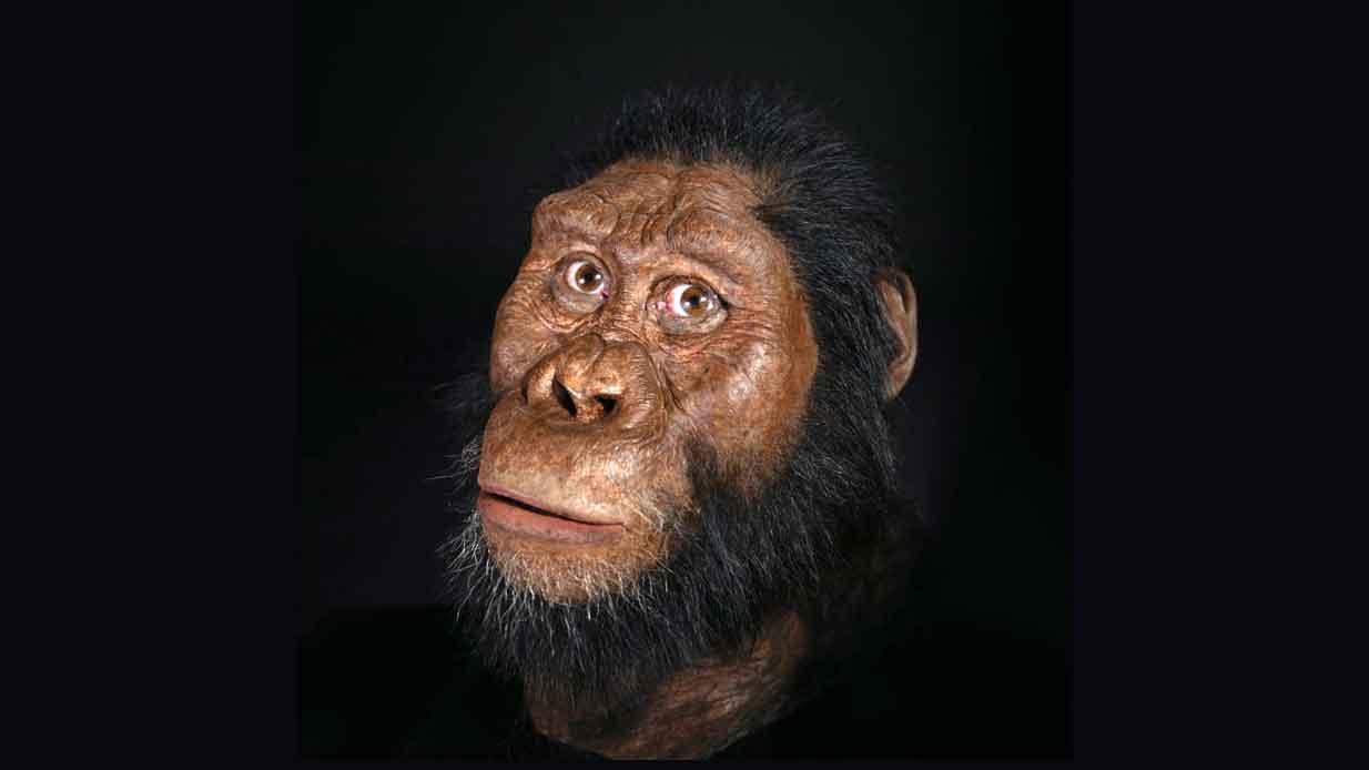 انسان اولیه استرالوپیتکوس