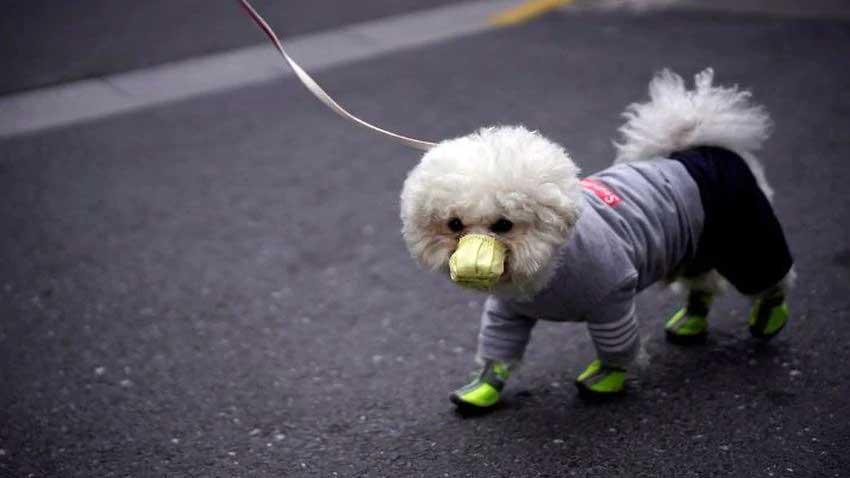 ویروس کرونا در سگ خانگی