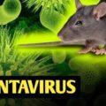 ویروس هانتا