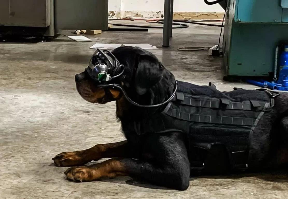 آزمایش هدست AR روی سگ ها توسط ارتش امریکا