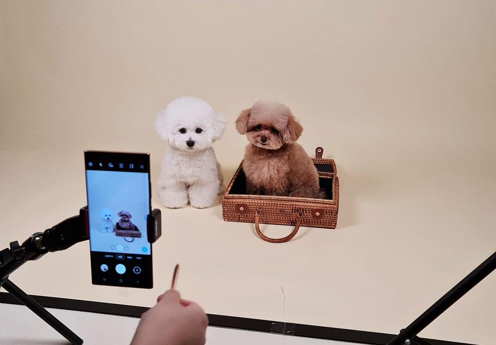 راهنمای عکاسی از حیوانات خانگی با گلکسی نوت20 سامسونگ