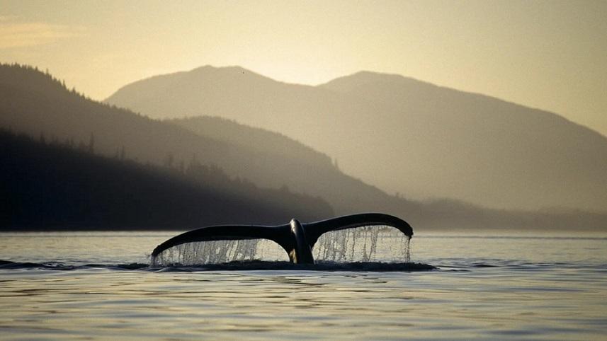 تاثیر شگفت انگیز نهنگ ها در کاهش گرمای زمین