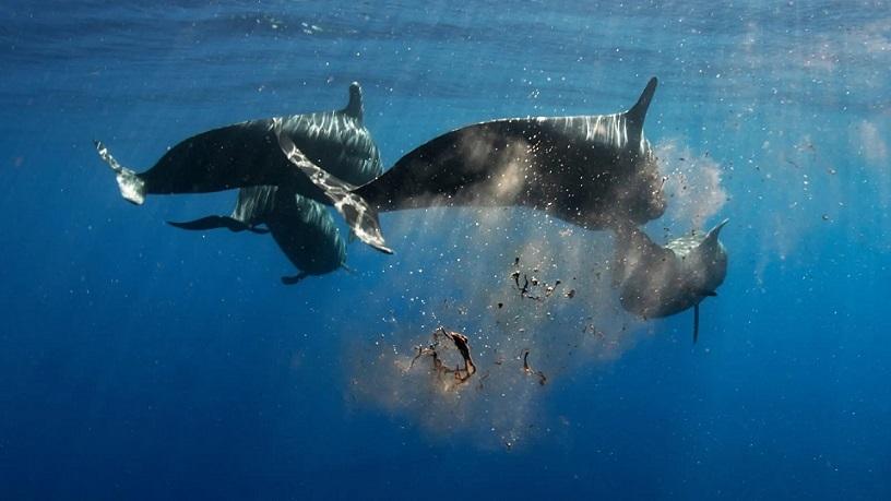 مدفوع نهنگ