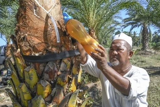 شیره درخت خرما
