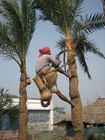 بالا رفتن از درخت عامل نیپا ویروس