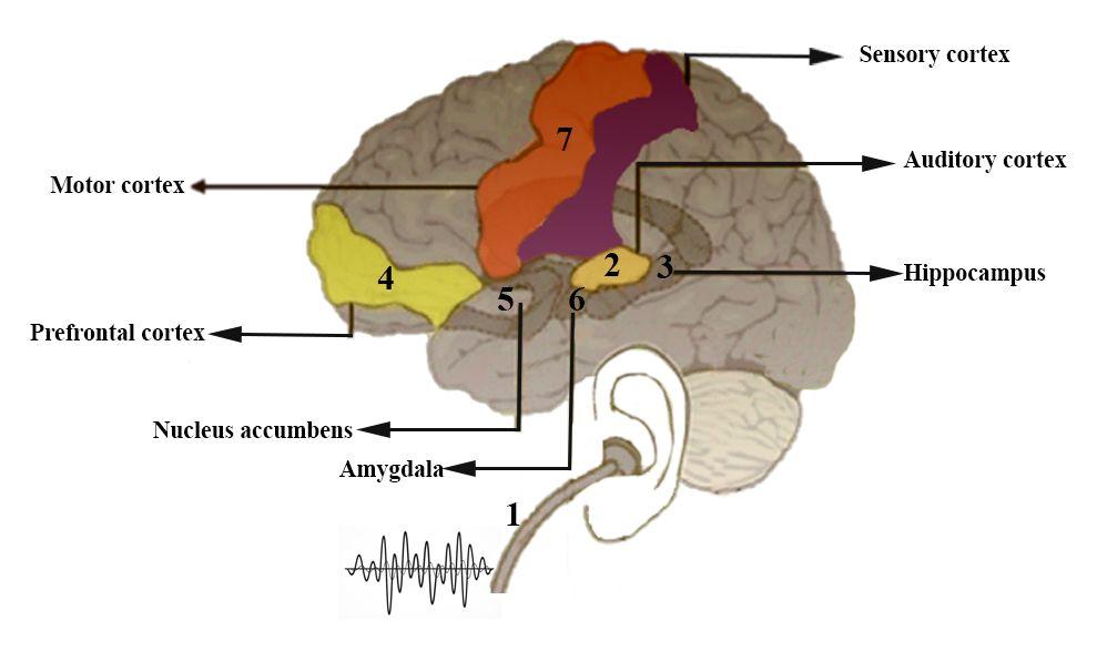 تاثیر موسیقی بر احساسات